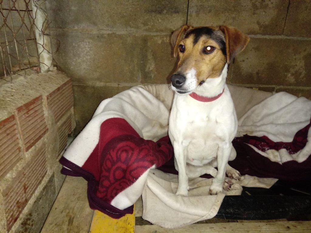 Bildertagebuch - ADALINE ist ein quirliges Terriermädchen, das ein neues Zuhause sucht - RESERVIERT - 37803137tm