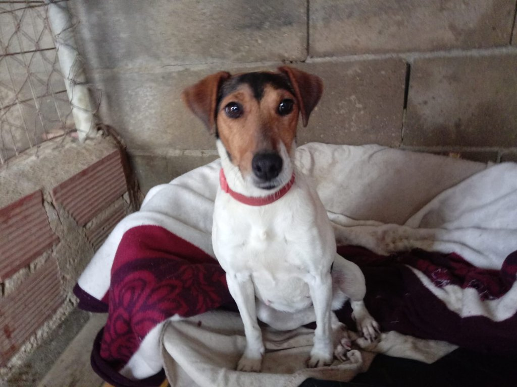 Bildertagebuch - ADALINE ist ein quirliges Terriermädchen, das ein neues Zuhause sucht - RESERVIERT - 37803139xf