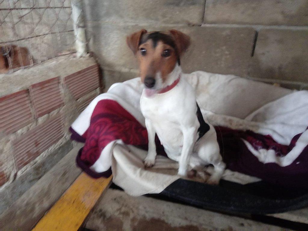 Bildertagebuch - ADALINE ist ein quirliges Terriermädchen, das ein neues Zuhause sucht - RESERVIERT - 37803140ao