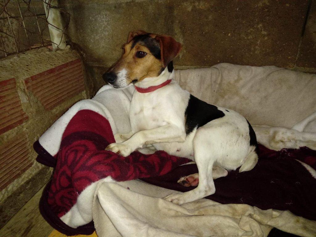 Bildertagebuch - ADALINE ist ein quirliges Terriermädchen, das ein neues Zuhause sucht - RESERVIERT - 37803141yq