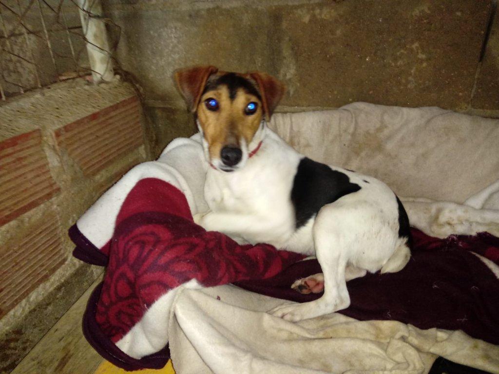 Bildertagebuch - ADALINE ist ein quirliges Terriermädchen, das ein neues Zuhause sucht - RESERVIERT - 37803254xh