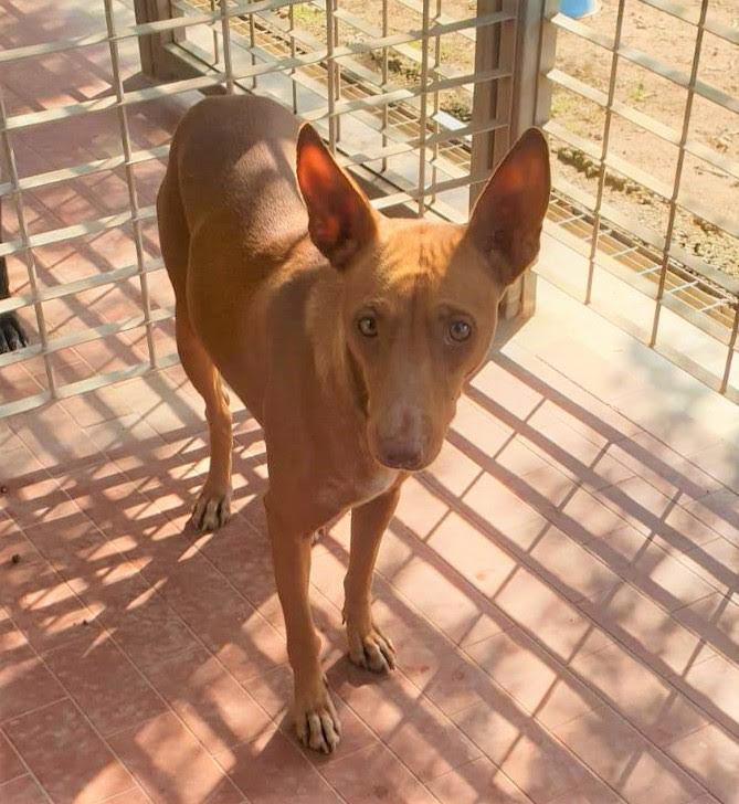 Bildertagebuch - MARIA (II) gehört einer seltenen Hunderasse an und wurde trotzdem ausgesetzt... 37855213yu