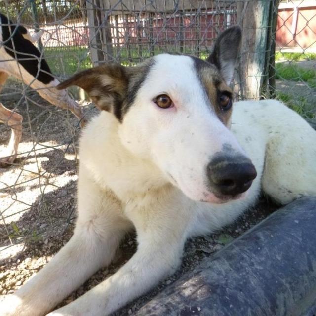 Bildertagebuch - SULAIKA und ihre Geschwister konnten vor Hundefängern gerettet werden - VERMITTELT - 37875936cw