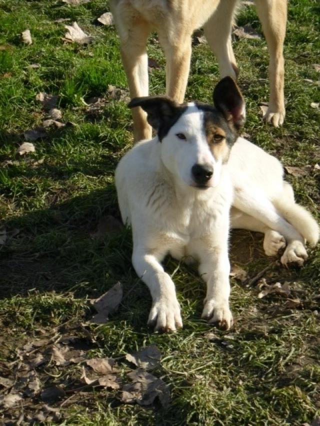 Bildertagebuch - SULAIKA und ihre Geschwister konnten vor Hundefängern gerettet werden - VERMITTELT - 37875937qg