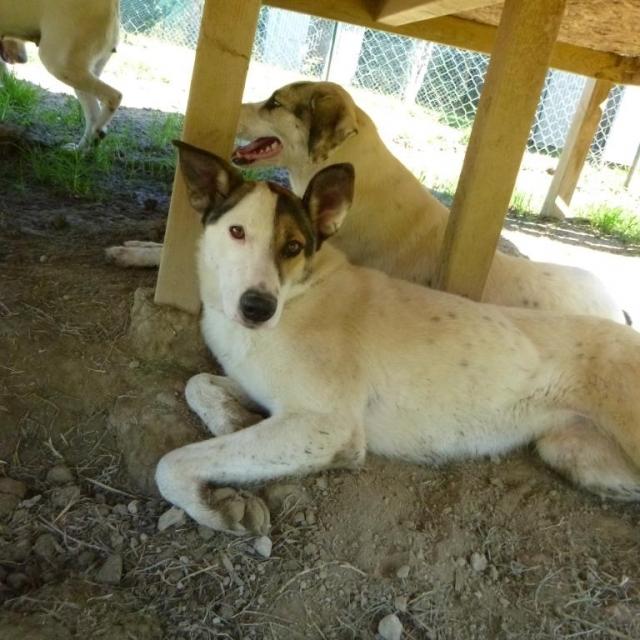 Bildertagebuch - SULAIKA und ihre Geschwister konnten vor Hundefängern gerettet werden - VERMITTELT - 37875938hd