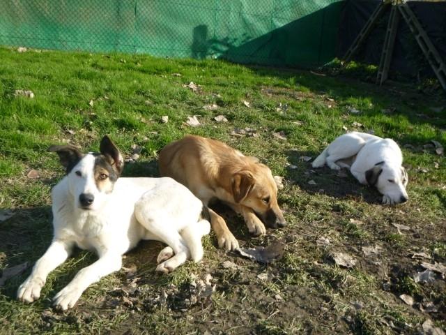 Bildertagebuch - SULAIKA und ihre Geschwister konnten vor Hundefängern gerettet werden - VERMITTELT - 37875940kb