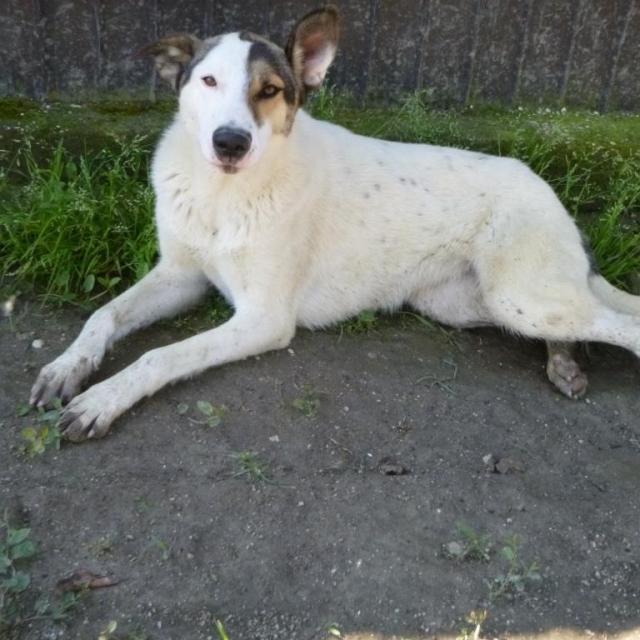 Bildertagebuch - SULAIKA und ihre Geschwister konnten vor Hundefängern gerettet werden - VERMITTELT - 37875941bz