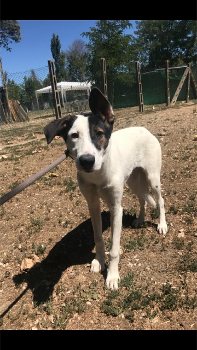 Bildertagebuch - SULAIKA und ihre Geschwister konnten vor Hundefängern gerettet werden - VERMITTELT - 37875942wt