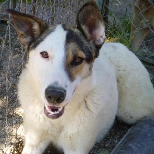 Bildertagebuch - SULAIKA und ihre Geschwister konnten vor Hundefängern gerettet werden - VERMITTELT - 37875943ek