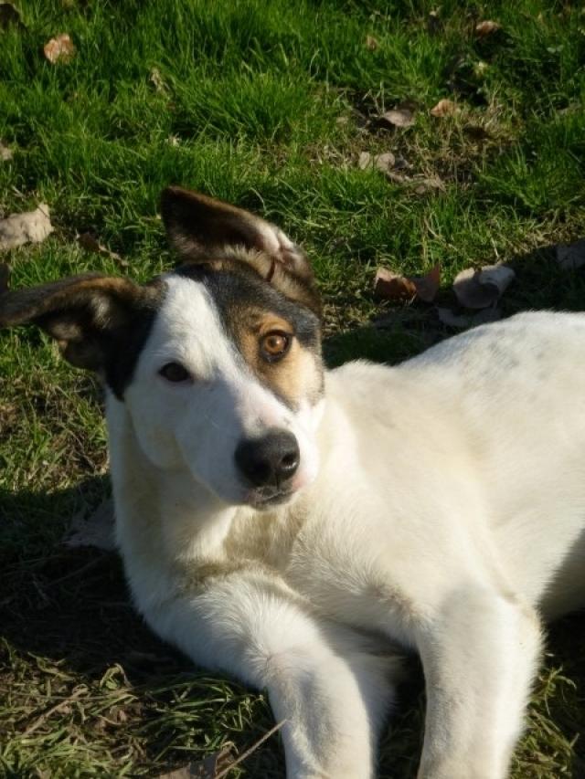 Bildertagebuch - SULAIKA und ihre Geschwister konnten vor Hundefängern gerettet werden - VERMITTELT - 37875944iu