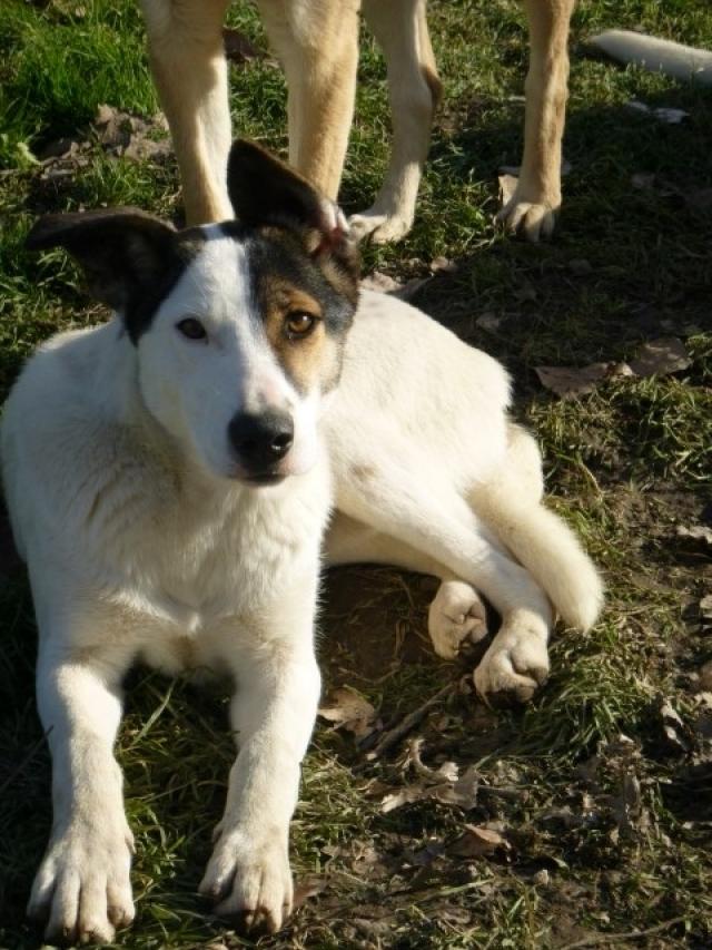 Bildertagebuch - SULAIKA und ihre Geschwister konnten vor Hundefängern gerettet werden - VERMITTELT - 37875946tf