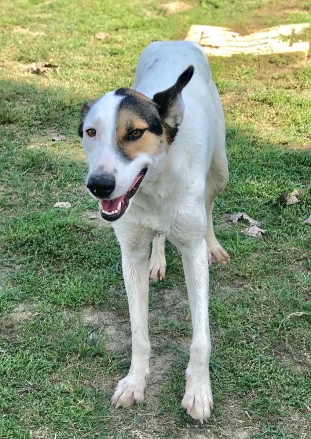 Bildertagebuch - SULAIKA und ihre Geschwister konnten vor Hundefängern gerettet werden - VERMITTELT - 37875947ij