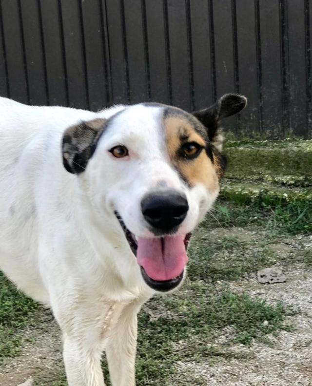 Bildertagebuch - SULAIKA und ihre Geschwister konnten vor Hundefängern gerettet werden - VERMITTELT - 37875948lo
