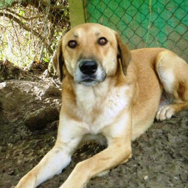 Bildertagebuch - SALOMON verlor seine Mutter an Hundefänger - VERMITTELT - 37876411pd