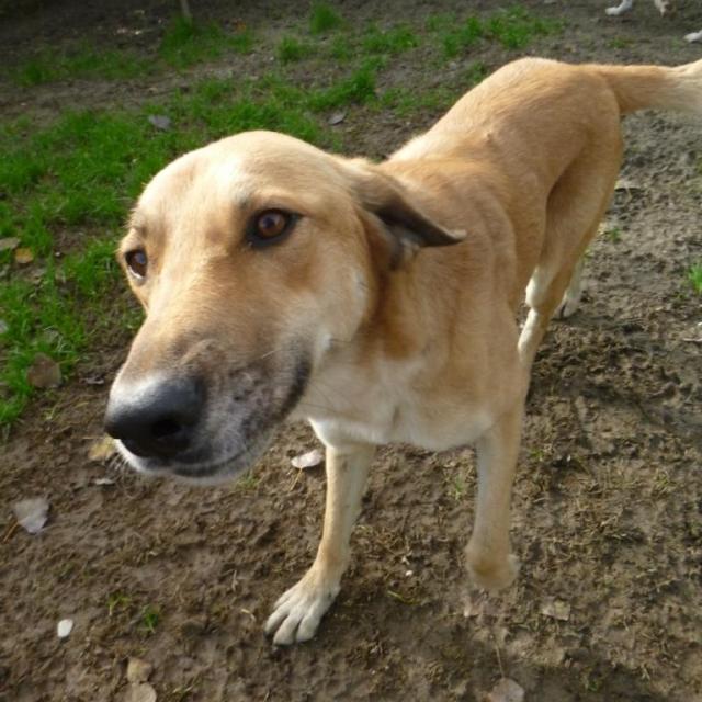 Bildertagebuch - SALOMON verlor seine Mutter an Hundefänger - VERMITTELT - 37876413bh