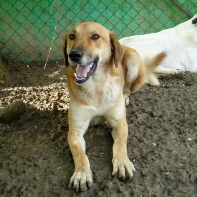 Bildertagebuch - SALOMON verlor seine Mutter an Hundefänger - VERMITTELT - 37876414xn
