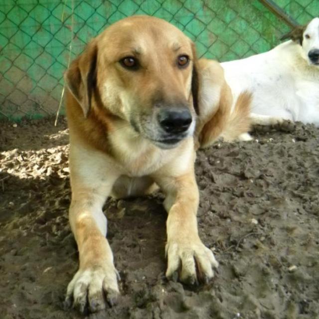 Bildertagebuch - SALOMON verlor seine Mutter an Hundefänger 37876415dm