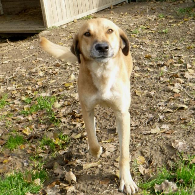 Bildertagebuch - SALOMON verlor seine Mutter an Hundefänger 37876416ec