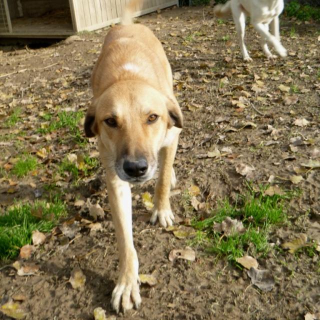 Bildertagebuch - SALOMON verlor seine Mutter an Hundefänger - VERMITTELT - 37876417zr