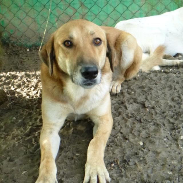 Bildertagebuch - SALOMON verlor seine Mutter an Hundefänger - VERMITTELT - 37876418xd