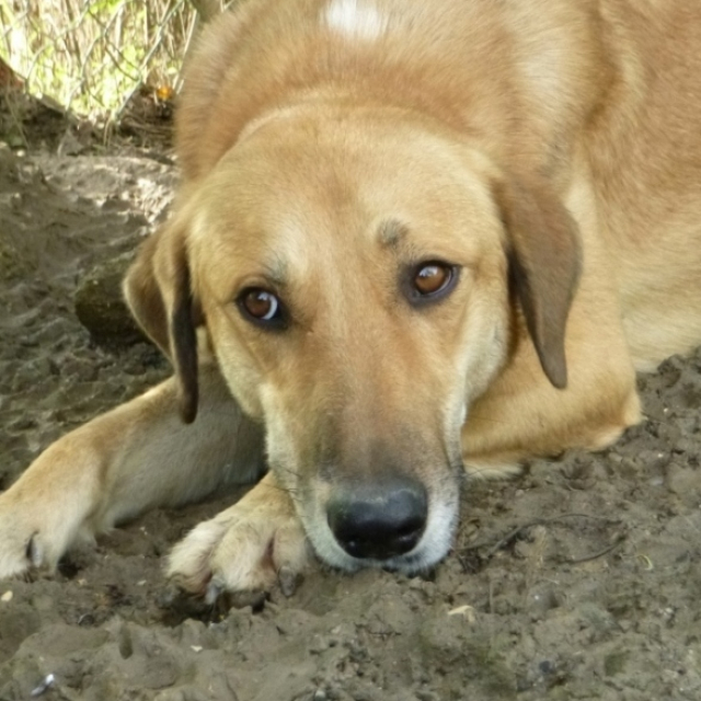 Bildertagebuch - SALOMON verlor seine Mutter an Hundefänger - VERMITTELT - 37876419wj