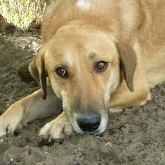 Bildertagebuch - SALOMON verlor seine Mutter an Hundefänger 37876419wj