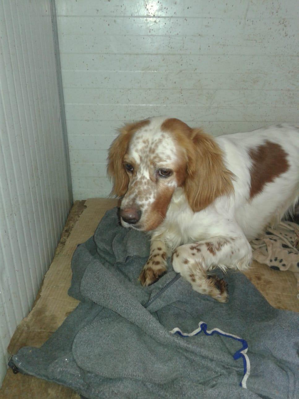 Bildertagebuch - EDOARDO wurde von Tierschützern aus einem Großcanile geholt... 37884892bw