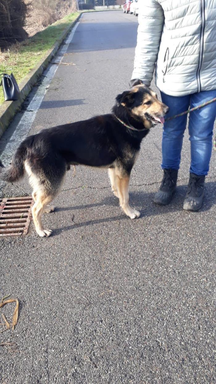 Bildertagebuch - SELMO, il grande, ein besonderer Hund sucht besondere Menschen... 37916428hr