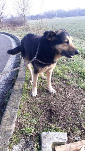 Bildertagebuch - SELMO, il grande, ein besonderer Hund sucht besondere Menschen... 37916430gy