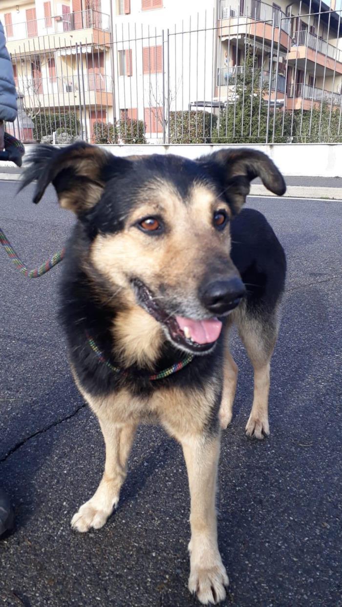 Bildertagebuch - SELMO, il grande, ein besonderer Hund sucht besondere Menschen... 37916434gk