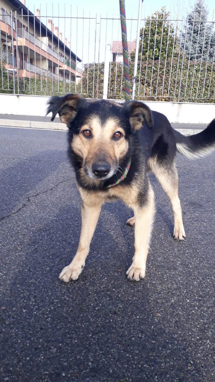 Bildertagebuch - SELMO, il grande, ein besonderer Hund sucht besondere Menschen... 37916435yl