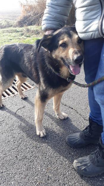 Bildertagebuch - SELMO, il grande, ein besonderer Hund sucht besondere Menschen... 37916436ha