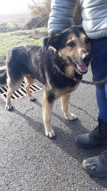 Bildertagebuch - SELMO, il grande, ein besonderer Hund sucht besondere Menschen... 37916438kg