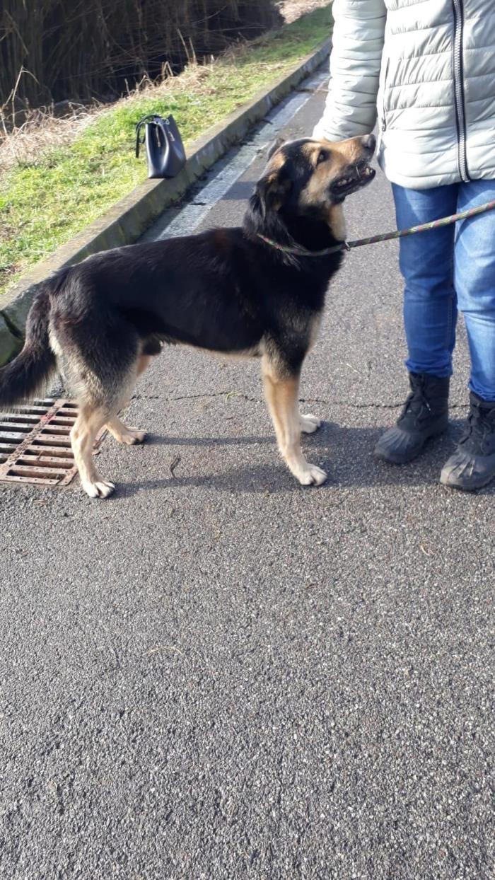Bildertagebuch - SELMO, il grande, ein besonderer Hund sucht besondere Menschen... 37916440km