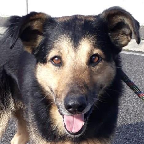 Bildertagebuch - SELMO, il grande, ein besonderer Hund sucht besondere Menschen... 37916441zl