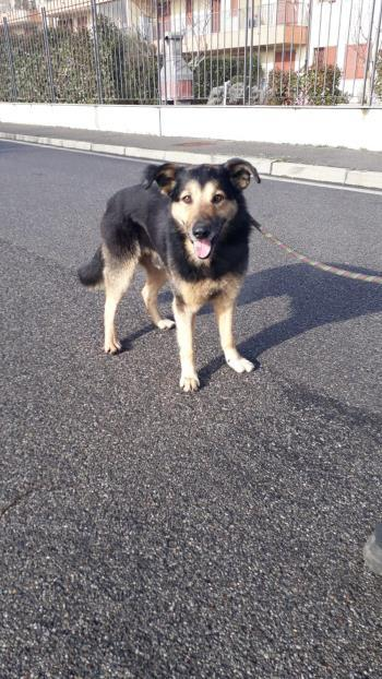 Bildertagebuch - SELMO, il grande, ein besonderer Hund sucht besondere Menschen... 37916444zq