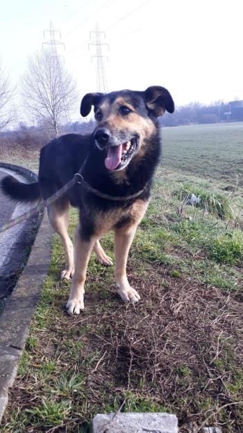 Bildertagebuch - SELMO, il grande, ein besonderer Hund sucht besondere Menschen... 37916445fs