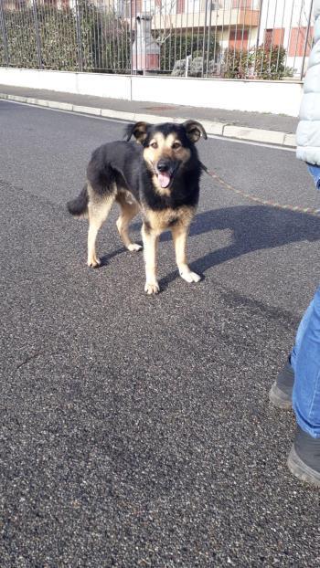 Bildertagebuch - SELMO, il grande, ein besonderer Hund sucht besondere Menschen... 37916448xd