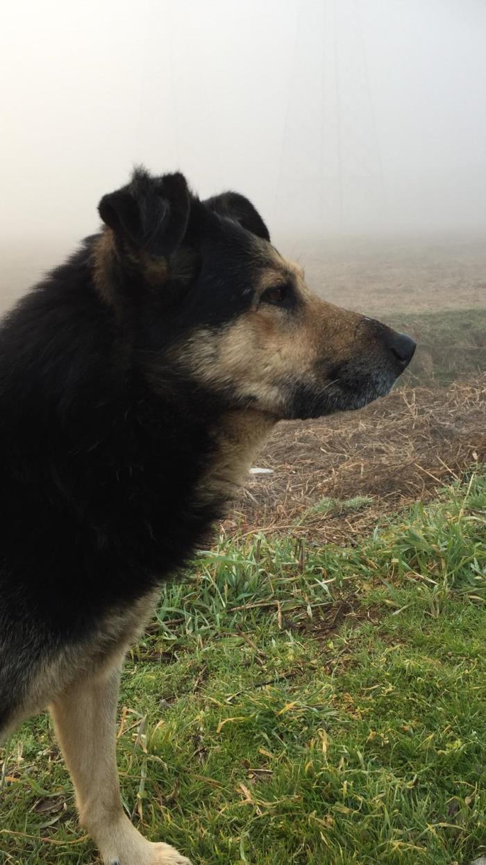 Bildertagebuch - SELMO, il grande, ein besonderer Hund sucht besondere Menschen... 37916455tx