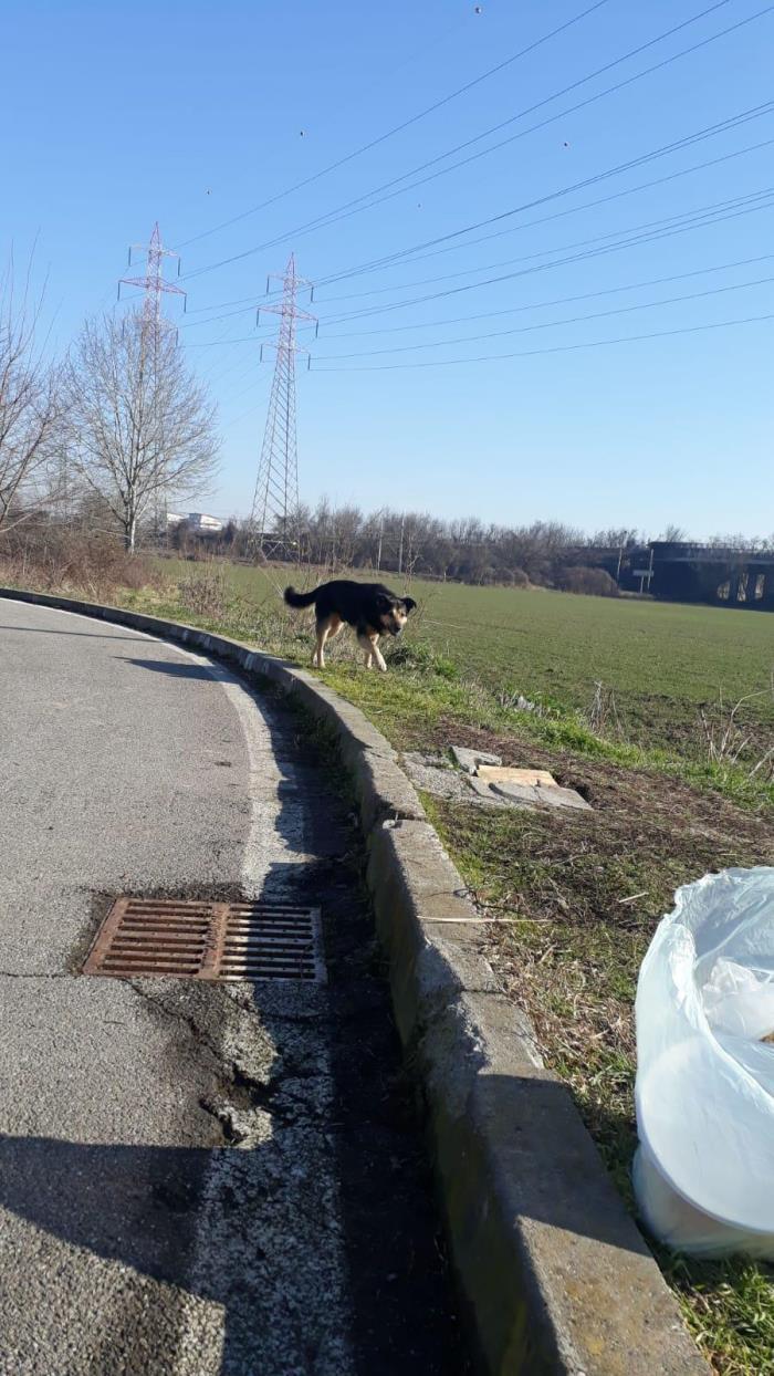 Bildertagebuch - SELMO, il grande, ein besonderer Hund sucht besondere Menschen... 37916456xu