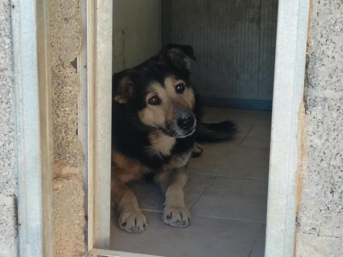 Bildertagebuch - SELMO, il grande, ein besonderer Hund sucht besondere Menschen... 37916457ph