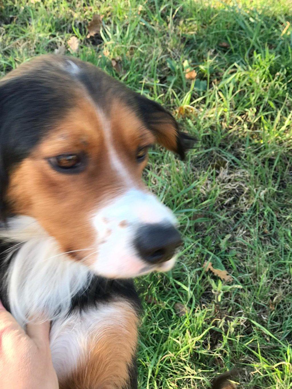 Bildertagebuch - SATIS, eine hübsche Hundemama sucht ihr eigenes Zuhause 37958027xw
