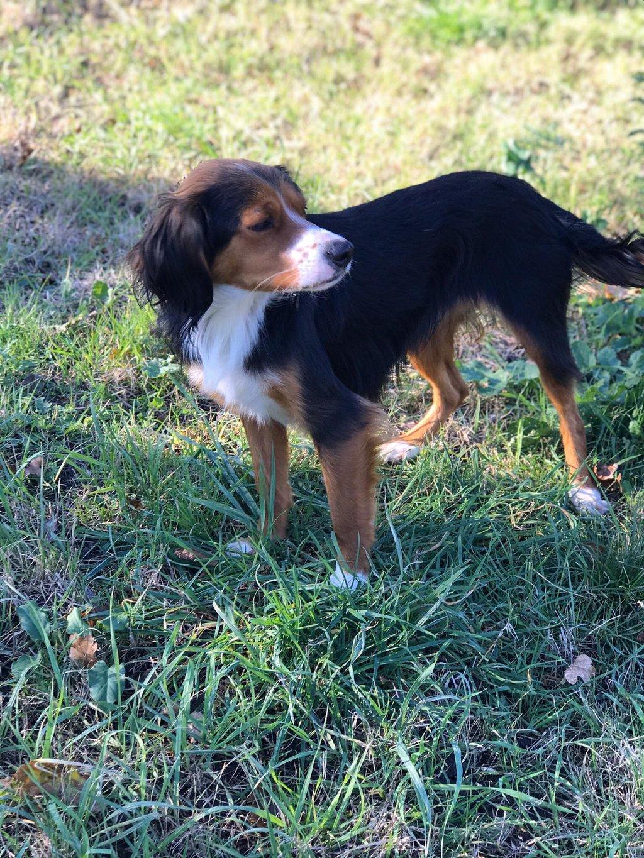 Bildertagebuch - SATIS, eine hübsche Hundemama sucht ihr eigenes Zuhause 37958029fy
