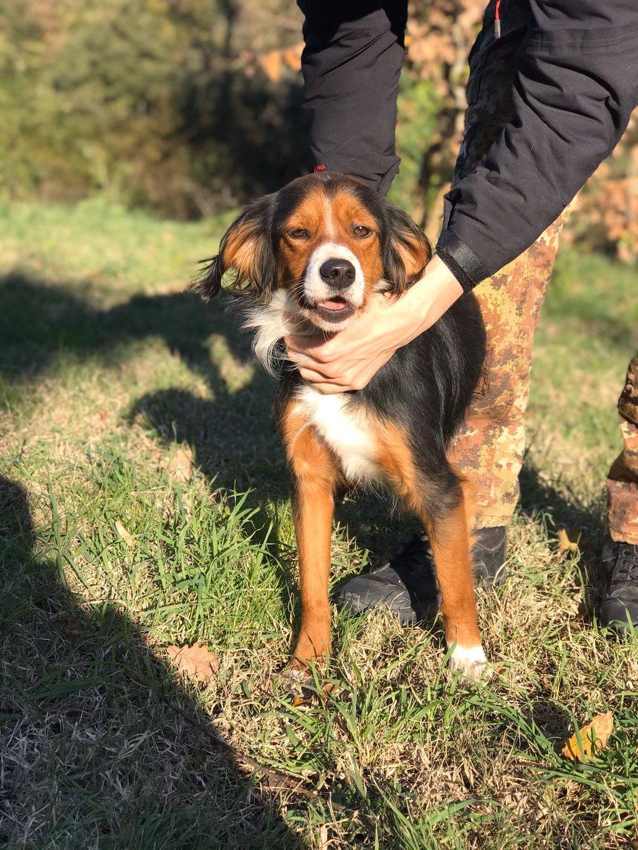 Bildertagebuch - SATIS, eine hübsche Hundemama sucht ihr eigenes Zuhause 37958030pa