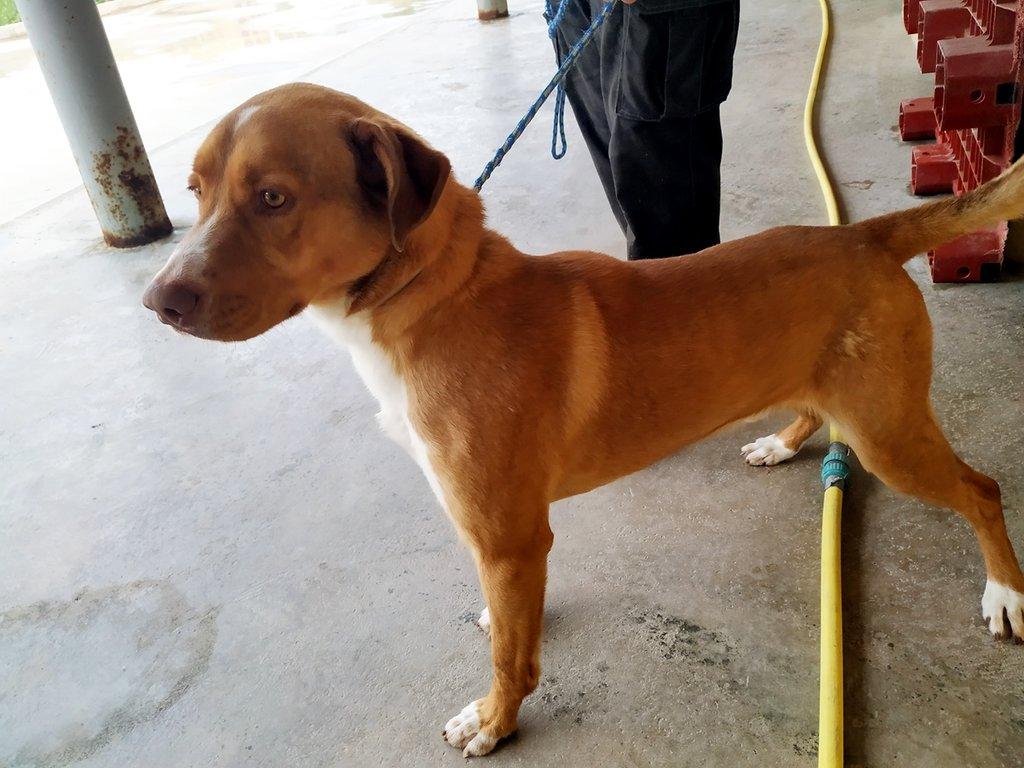 Bildertagebuch - RUFO, ein dynamischer Junghund sucht seine Familie... 37962531ni