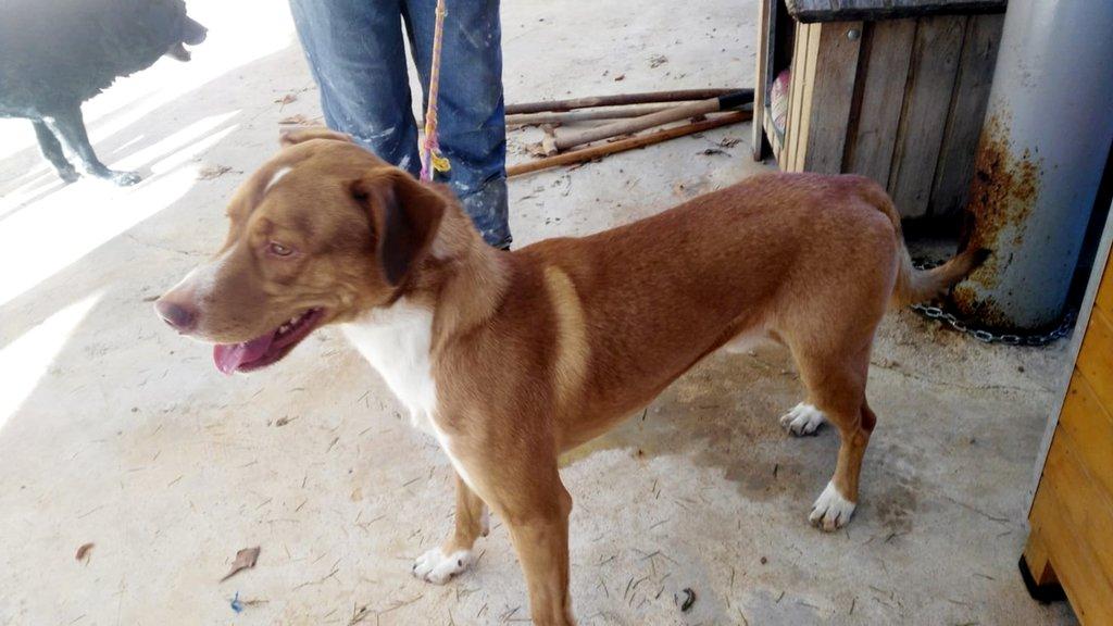 Bildertagebuch - RUFO, ein dynamischer Junghund sucht seine Familie... 37962536jl
