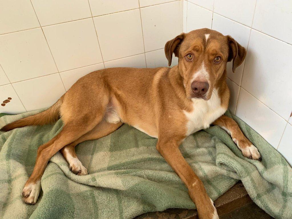 Bildertagebuch - RUFO, ein dynamischer Junghund sucht seine Familie... 37962539ka