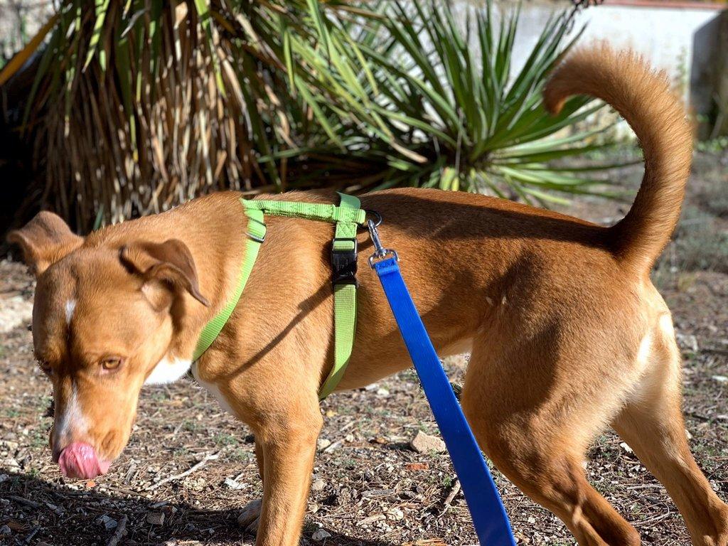 Bildertagebuch - RUFO, ein dynamischer Junghund sucht seine Familie... 37962540uh