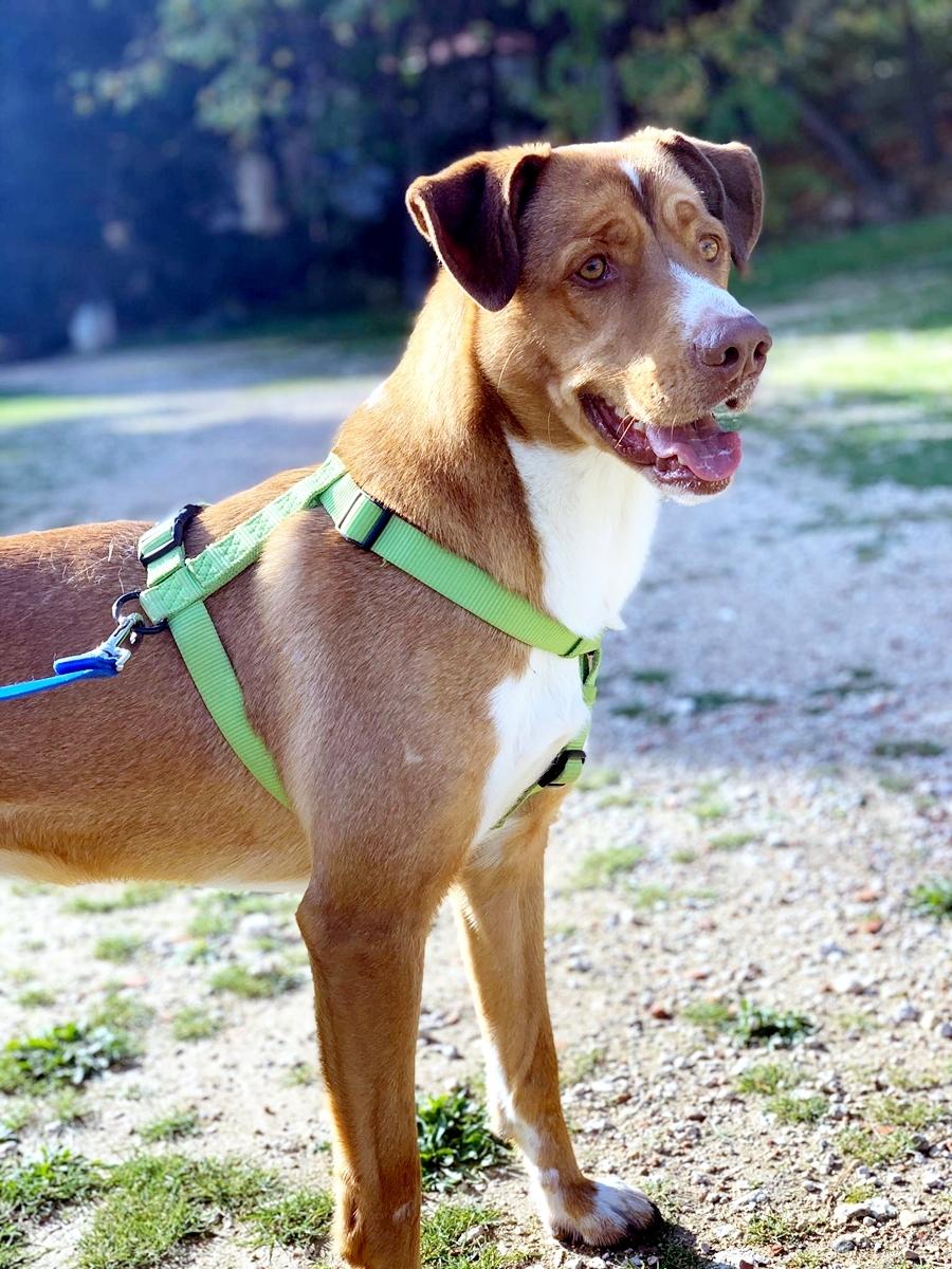 Bildertagebuch - RUFO, ein dynamischer Junghund sucht seine Familie... 37962541yb