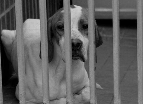"""Unsere """"unsichtbaren"""" Hunde suchen ihre Menschen… 38049264fl"""